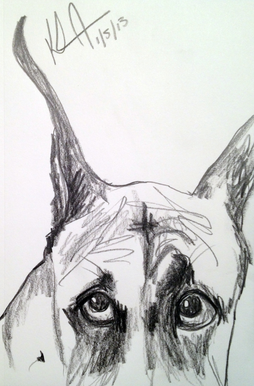drawing of a great dane