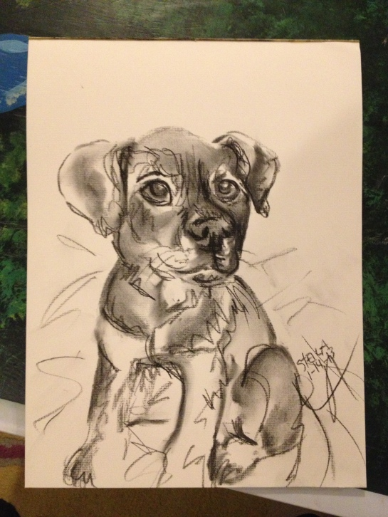 charcoal drawing of a shelter dog