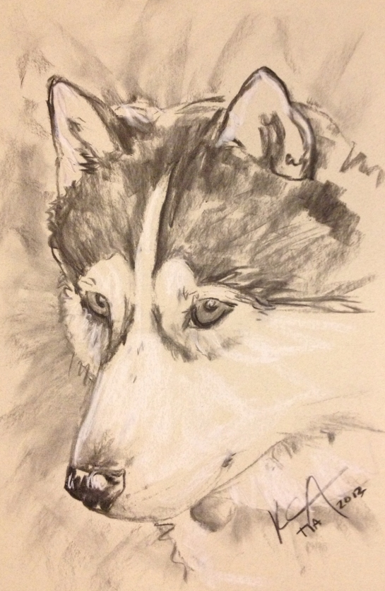 Siberian husky art drawing