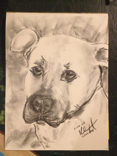 Charcoal portrai of a pit bull dog