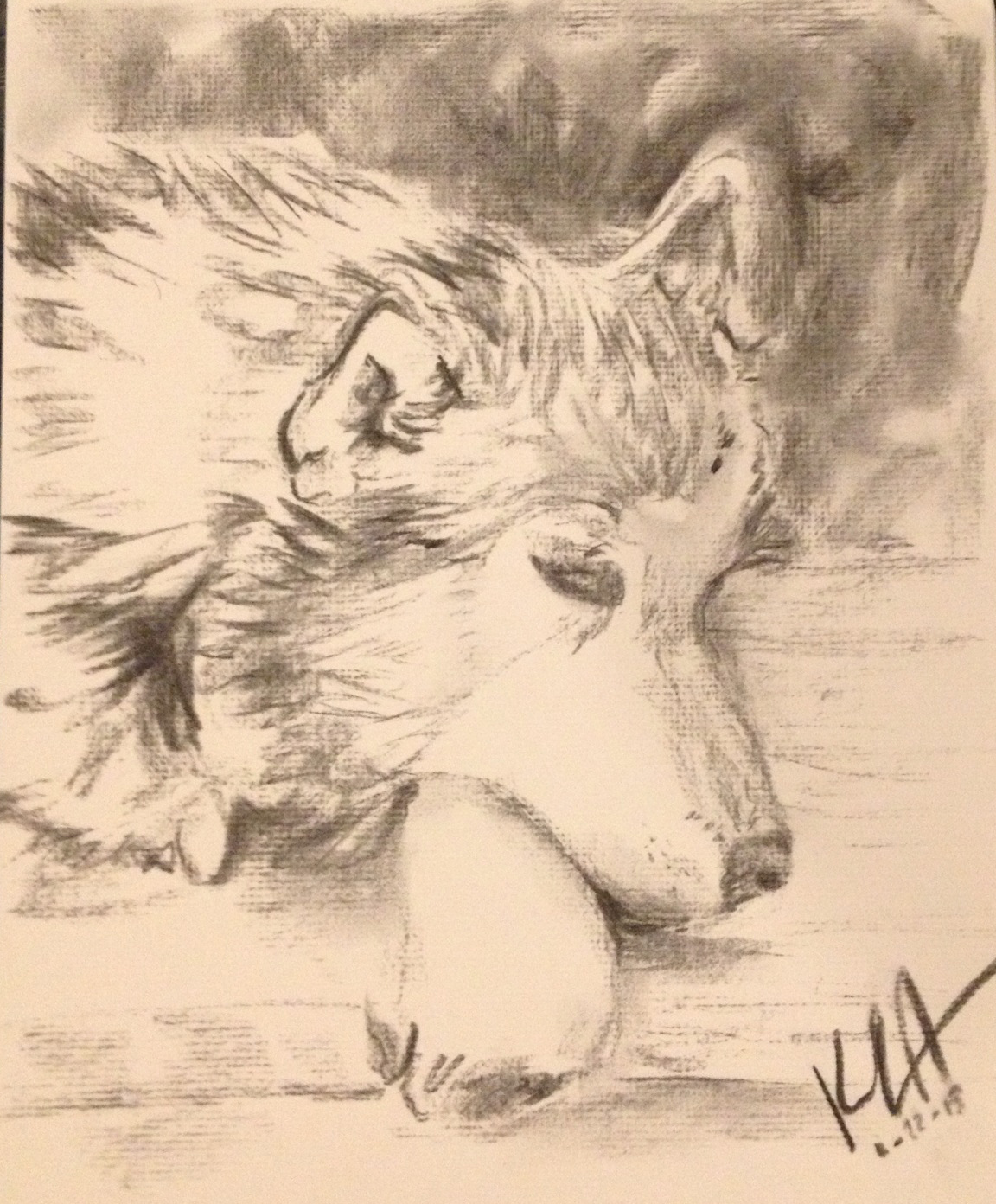 How To Draw A Siberian Husky Apps Directories Step How To Draw A Dog Husky  Youtube