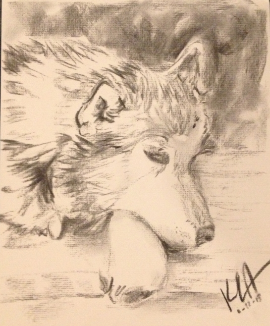Siberian husky drawing