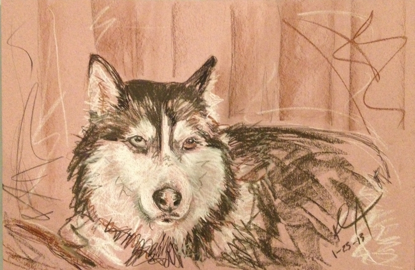 Conte crayon drawing of a Siberian husky