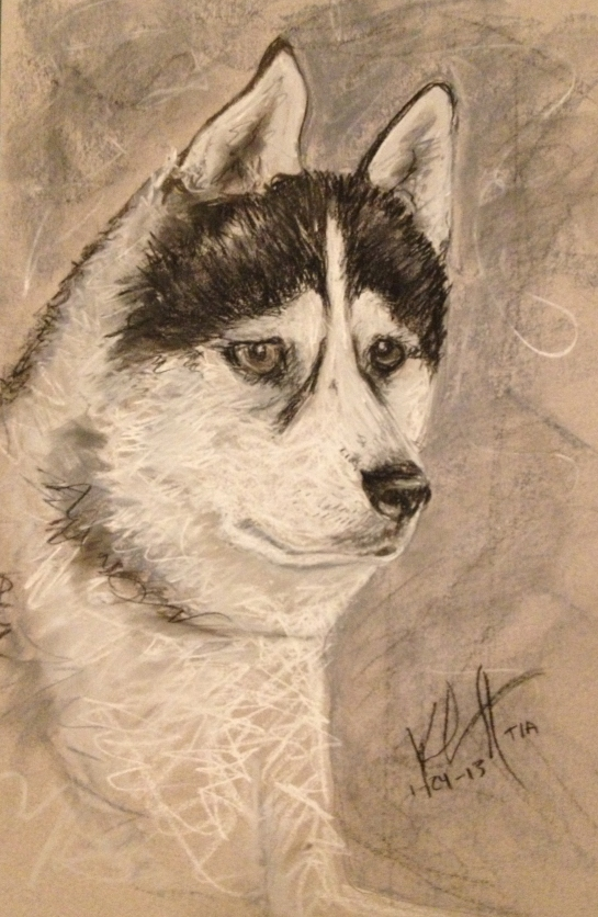 siberian husky drawing
