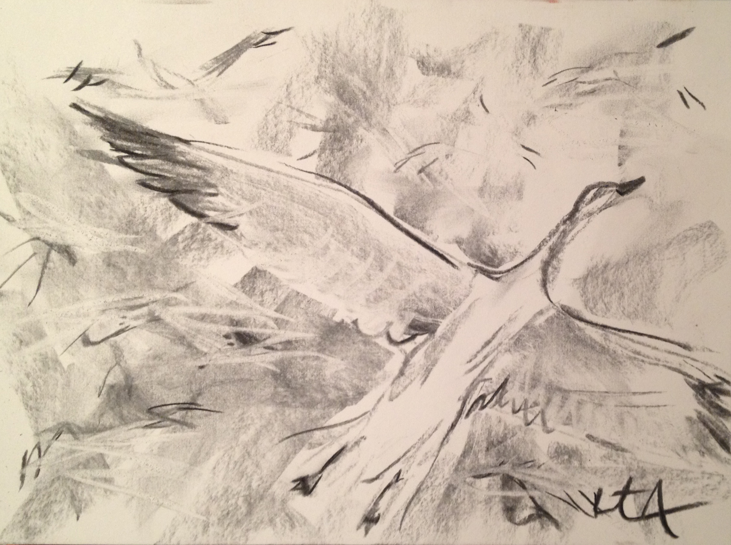 Wild Geese Drawing Drawing of a Flock of Snow