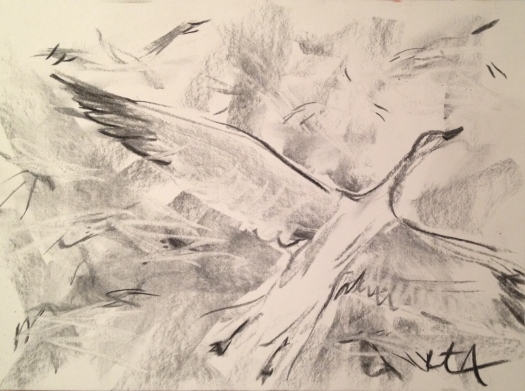Drawing of a flock of snow geese in eastern pennsylvania
