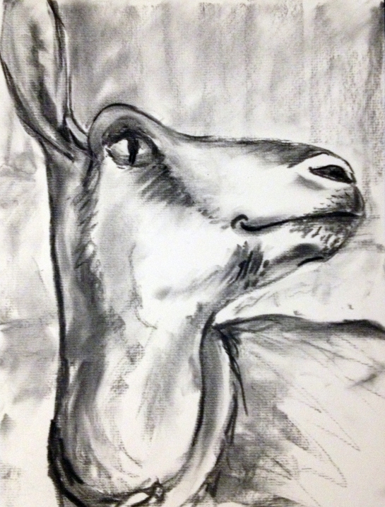 charcoal drawing of a goat