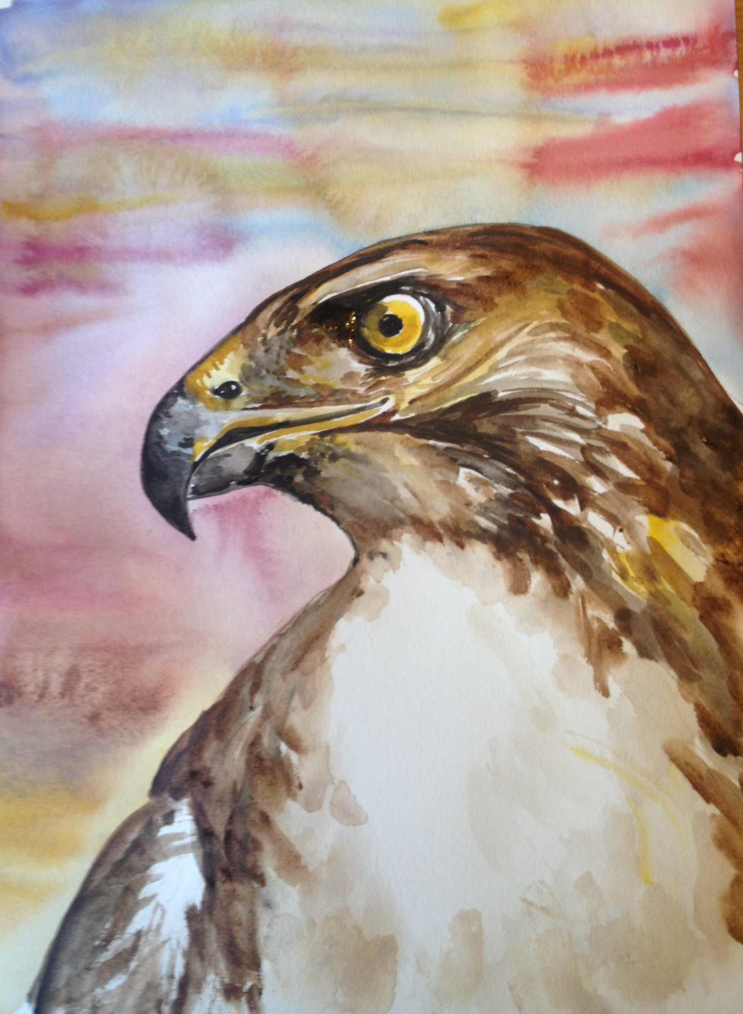 Hawk painting watercolor - photo#21