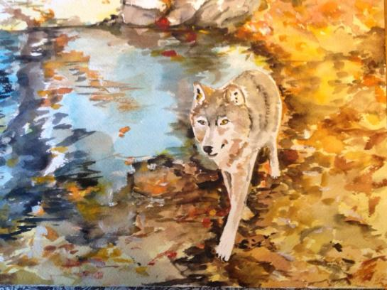 Watercolor Painting of a Wolf Near Water