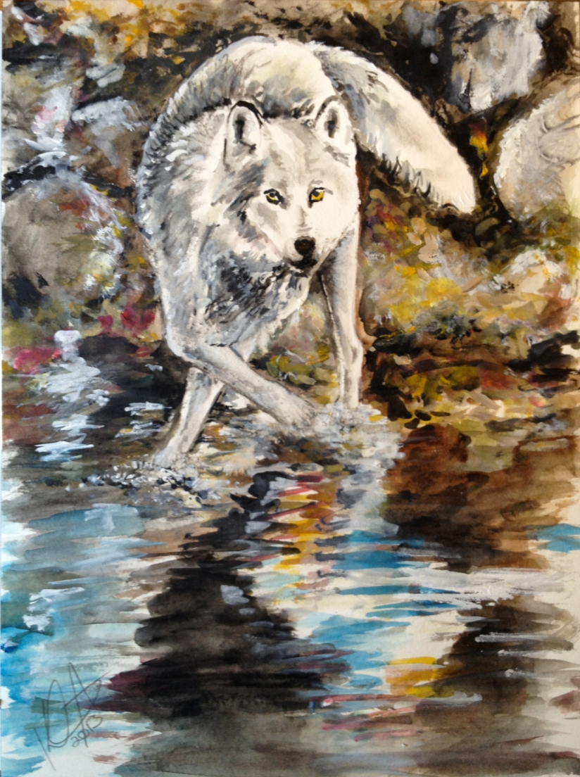Watercolor Painting of a Wolf Stopping to Drink