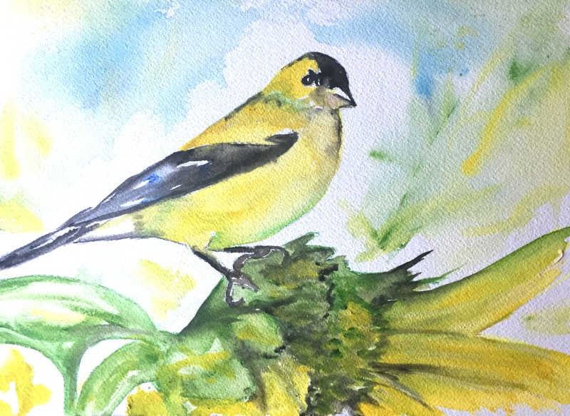 """""""Gold Finch Brunch"""" Watercolor on paper, 9"""" x 12"""" $100 