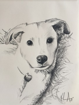 Dog Study; Charcoal on paper, 9 x 12, SOLD
